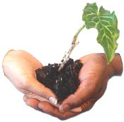 Growing Lifelong Partnerships